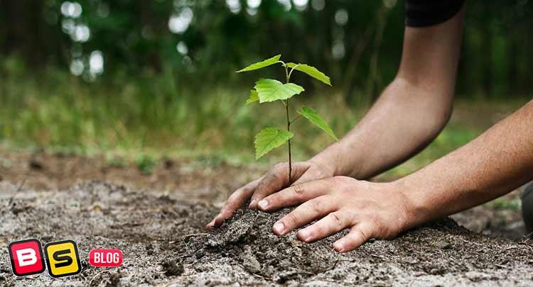 کاشت گیاهان